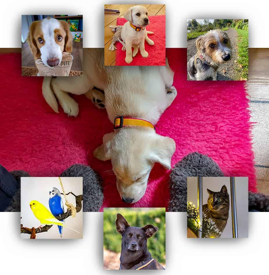 Collage mit vier süßen Hunden, einer Katze und zwei Wellensittichen